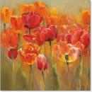 פרחים שדה פריחה אביב צבעים כתום צבעונים במרכז 2
